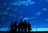 visitors at aquarium poster