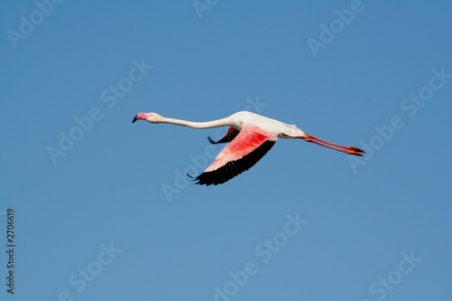 Tuinposter Flamingo vol d'un flamant rose