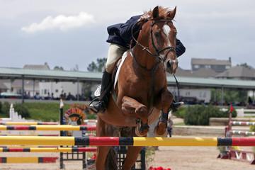 horse & rider showjumping