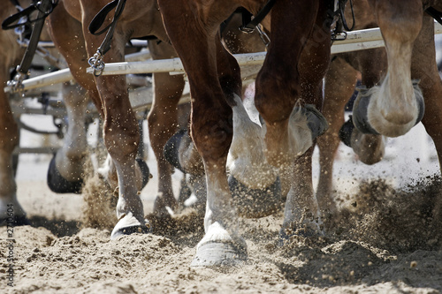 draft horse hooves in action