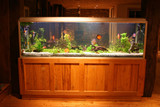 Fototapety fish tank