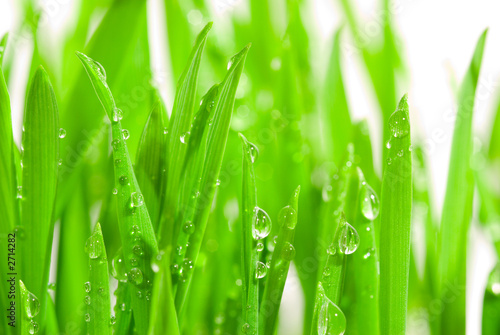 Leinwanddruck Bild fresh grass with dew drops
