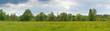 panorama of yellow medow