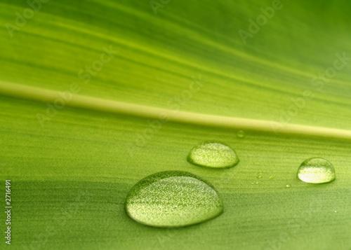 Leinwanddruck Bild plant leaf