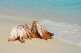 wooden stump on beach poster