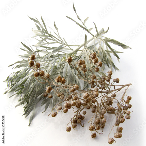 wormwood leaves and seeds