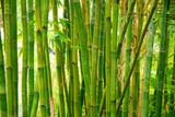 Fototapety bamboo stalks