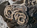 mushrooms on stump poster