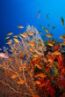 underwater view, coral reef