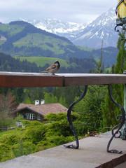 austria,kitzbuhel
