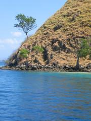 detail of the yellow dry hills, komodo archipelago, indonesia