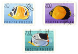 postal stamps - set with fish poster