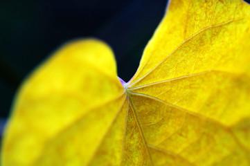 details of leaf