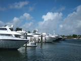 luxury yachts at urban marina poster