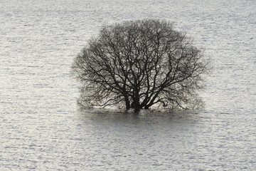 drowned tree