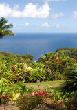 lush foliage at a tropical garden in hawaii poster