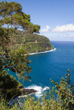scenery from road to hana in maui, hawaii poster