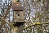 birdbox fix to a tree poster