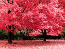 otoño fantasía