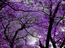 "Постер, картина, фотообои ""purple spring"""