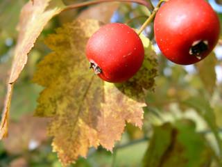 autumn and rowan
