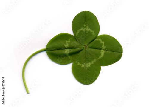 Quadrifoglio di luca manieri foto stock royalty free - Immagini di quadrifoglio a quattro foglie ...