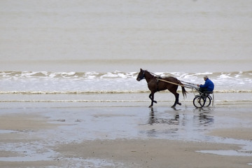 cheval - plage