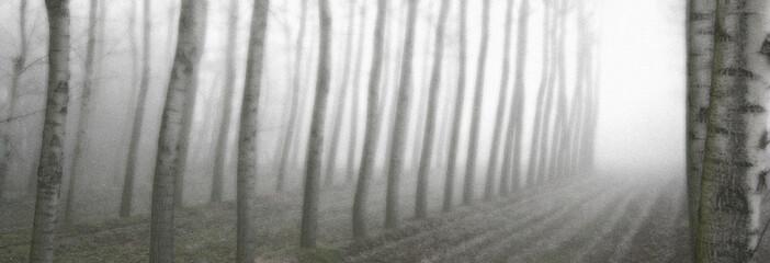 nebbia 11