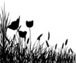Leinwanddruck Bild grass and flower