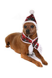 humorous photo of dog in warm clothing poster