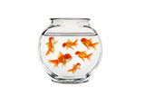 goldfish bowl with many fish swimming poster