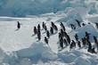 Leinwandbild Motiv penguin group with leader