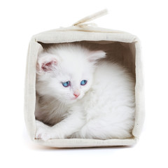 white kitten in a basket.