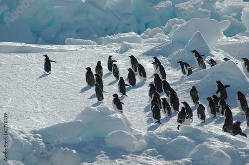 penguin group with leader - 2770439