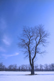 single tree in winter weather poster