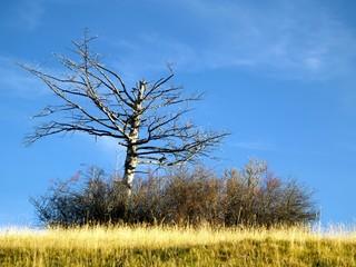 lone dry tree