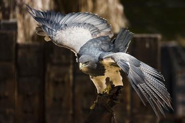 extiende tus alas
