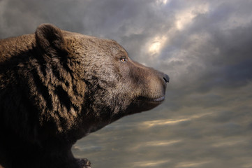 bear and the sky