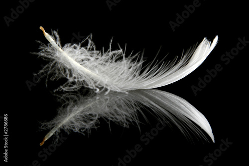 feather on black