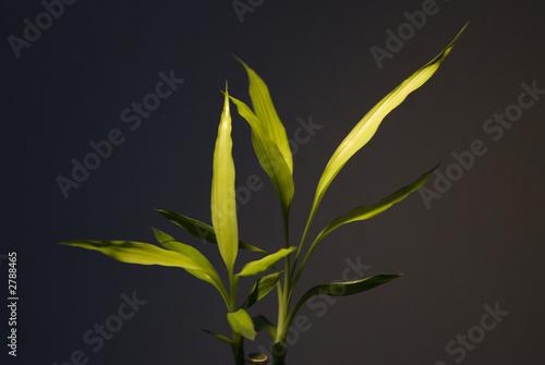 bambou lumiere feuilles tranparence verte jaunes de cdrcom photo libre de droits 2788465 sur. Black Bedroom Furniture Sets. Home Design Ideas