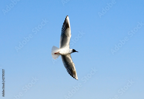 bird at sea, seagull, la mouette, blue air