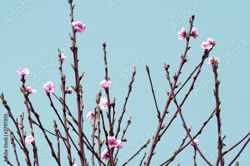 arbre branches et fleurs rose au printemps de arkna photo libre de droits 2797030 sur. Black Bedroom Furniture Sets. Home Design Ideas