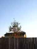 fence, house and tree