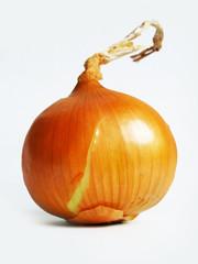 onion on the white