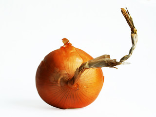 one onion on the white