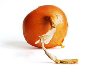 one onion isolated on the white background