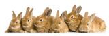 Fototapete Birth - Begegnung - Haustiere