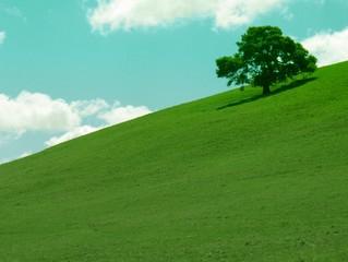 green hills - blue sky 4