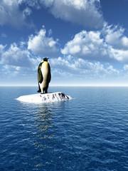 penguine_cs