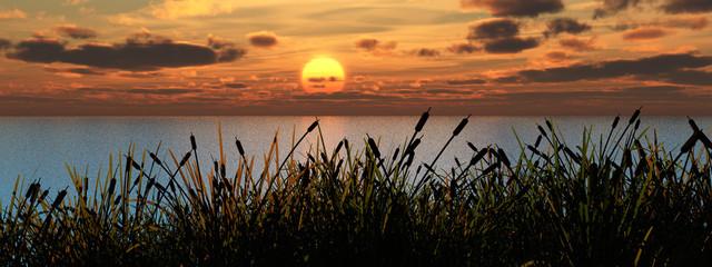 reeds_sunset